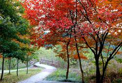 【红叶缤纷漫步小道】笑翻天美景